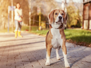 Top Reasons To start a Pet Care Related Company