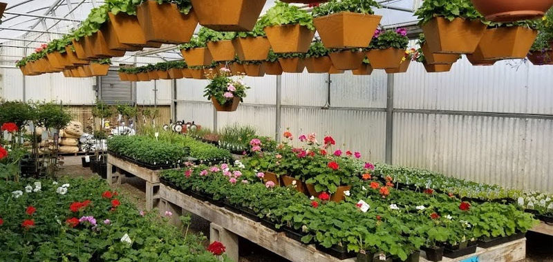 Get Greenery at a Nursery in Anchorage